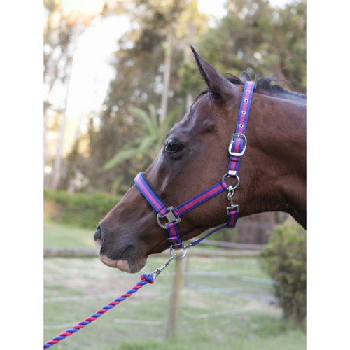 Capriole Equestrian Rose & Royal Blue Halter and Lead Rope Set-Capriole Equestrian-Tacklet
