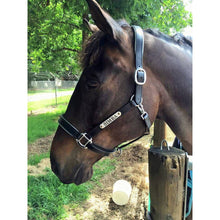 Load image into Gallery viewer, Leather Halter - Silver Fittings with Engraved Horse Nameplate