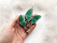 Set of 3 Luna Moth Hair Pins for anyone who loves Moths and Butterflies