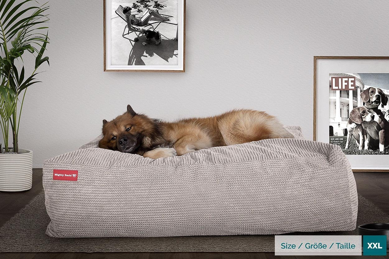 Crash Pad Dog Beds