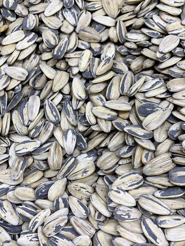 Bleached Sunflower Seeds 1lb - Papaya Express