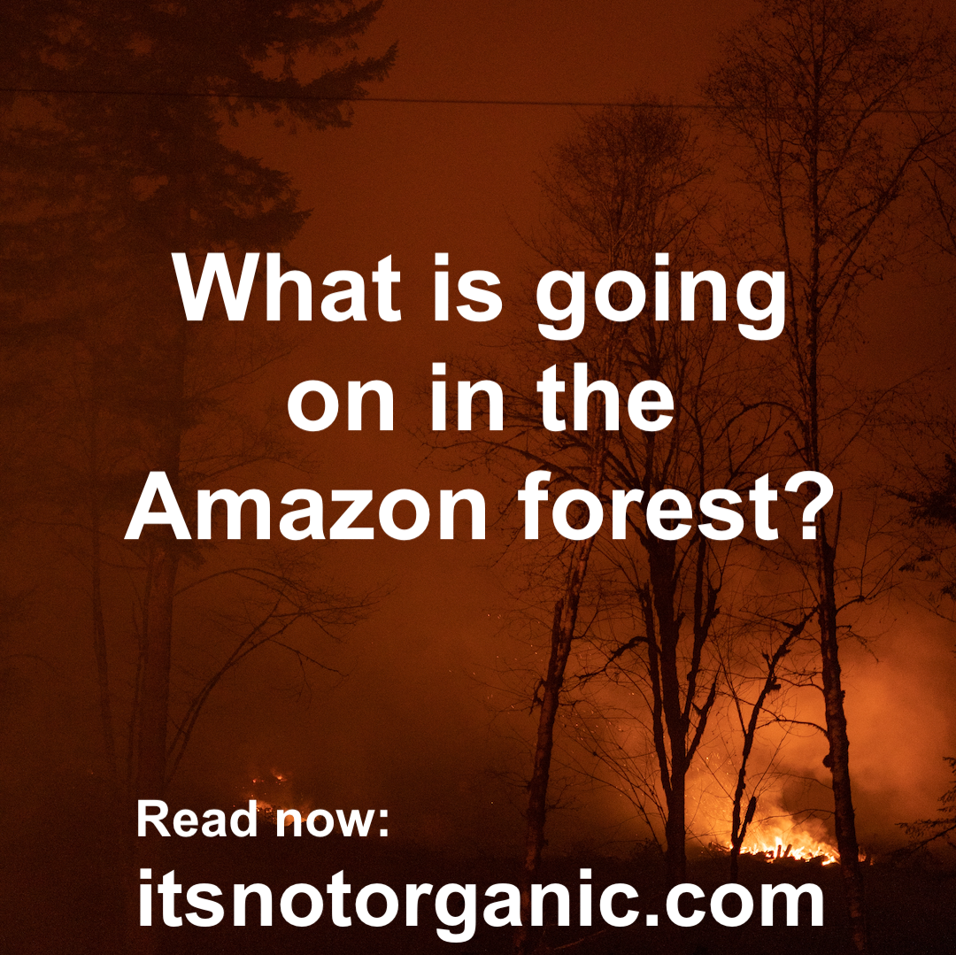 What is going on in the Amazon forest?