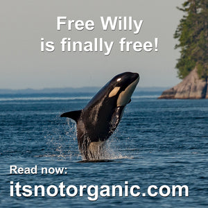 Free Willy is finally free!  Well, at least in one country...