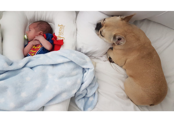 Guest blog -Introducing a new baby to your family dog by Amie Williams -Read
