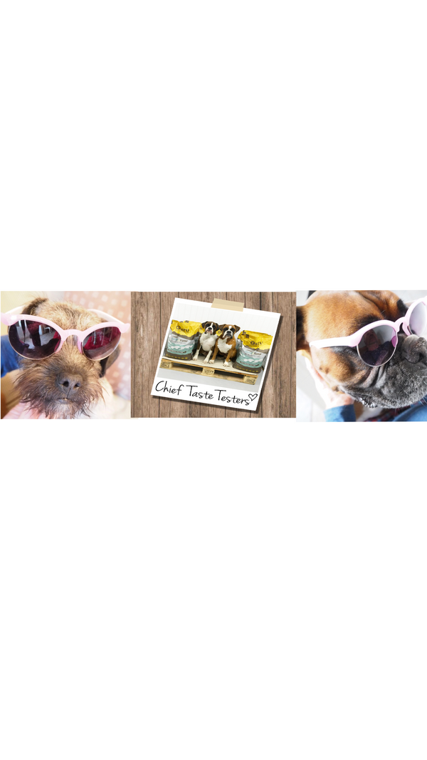 Guest interview with the Hettie pups Mabel and Bruce and Gino and Duke from Guru Pet Food