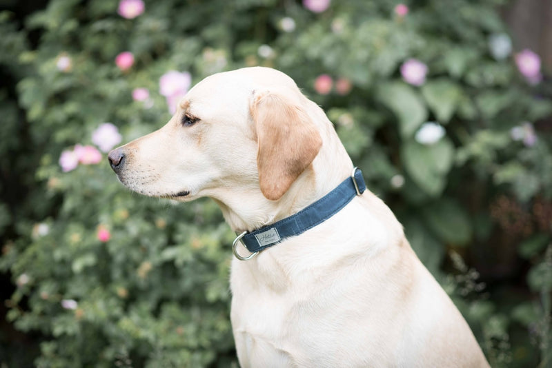 Dog Collar - navy canvas