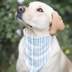 Charlie Dog Bandana - chambray