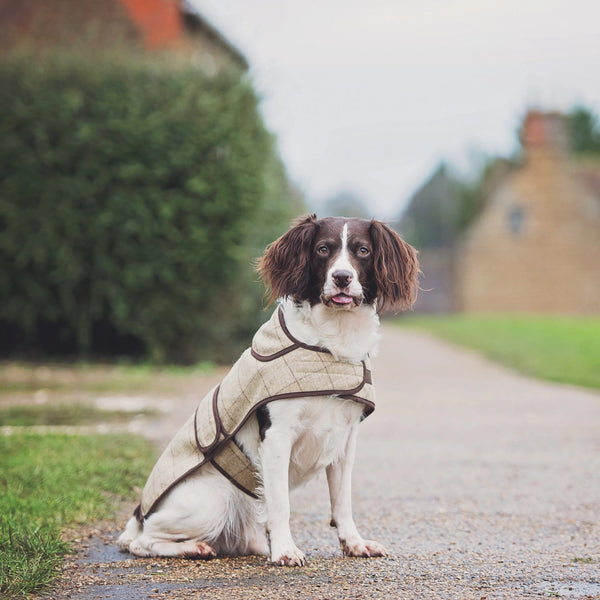 Jasper Dog Coat - Slate Oatmeal
