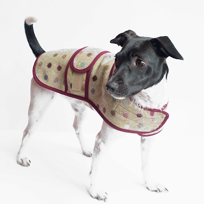 Jasper Dog Coat - Multispot Lime