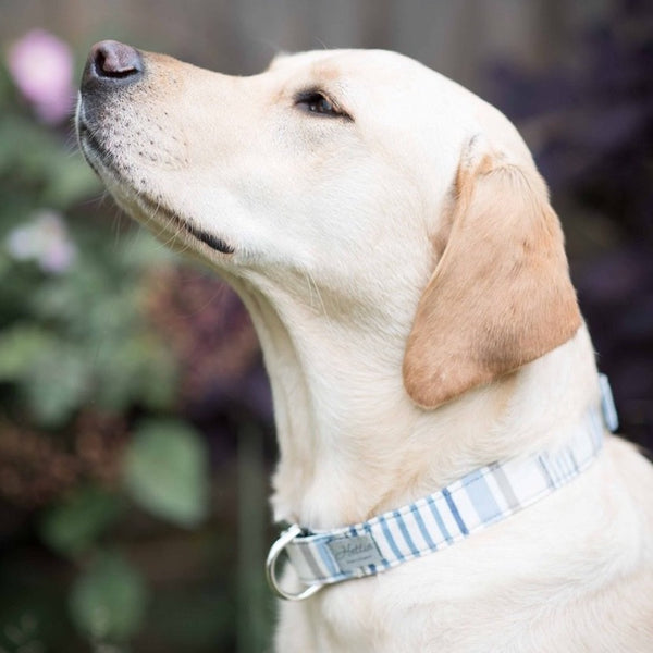 Dog Collar - chambray