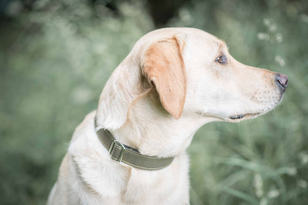 Dog Collar - green canvas