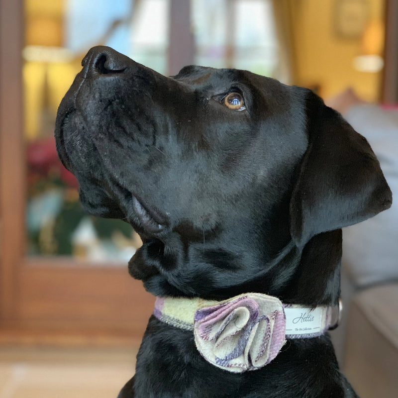 Dog Collar - Gargrave Lilac <br> + FREE Bowtie or Flower