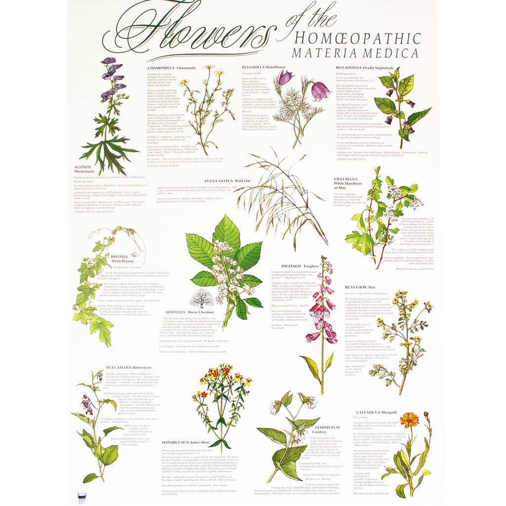 Poster - Flowers of the Materia Medica (with hangers)