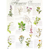 Poster - Flowers of the Materia Medica (laminated with hangers)