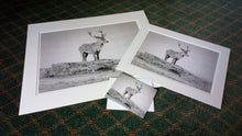 Load image into Gallery viewer, P-07 - Stag (A4 print)