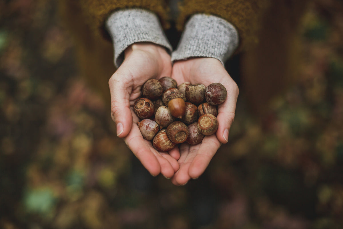 woman holding acorns, eco products for the home