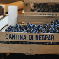 Cantina di Negrar 4-Course Wine Dinner at Theo Mistral By Theo Randall - icgs-eshop
