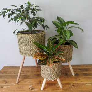 Natural Basket on Stand