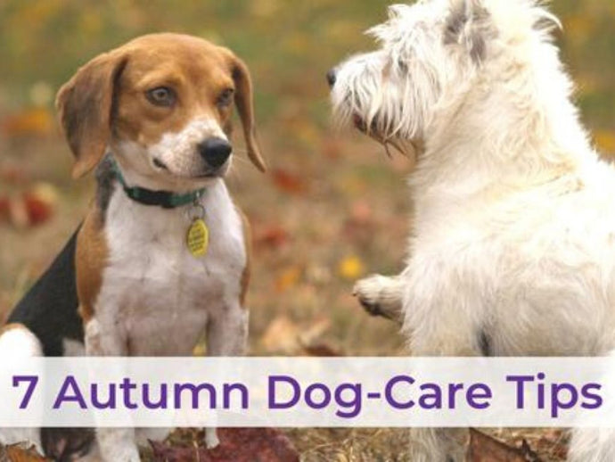 7 Autumn Dog Care Tips for a Fabulous Fall