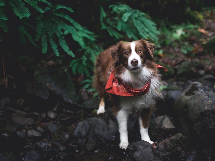 4 Easy Dog Photography Tips (Phone-Camera Friendly!)