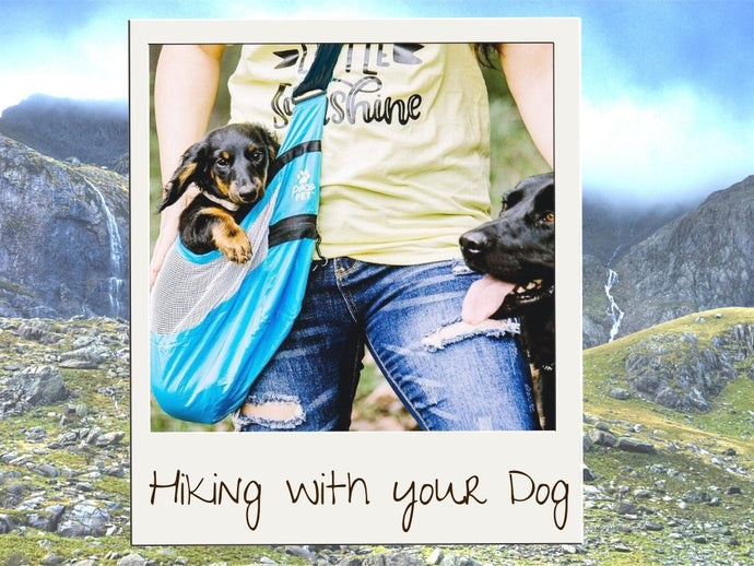 Tips For Hiking With Your Small Dog