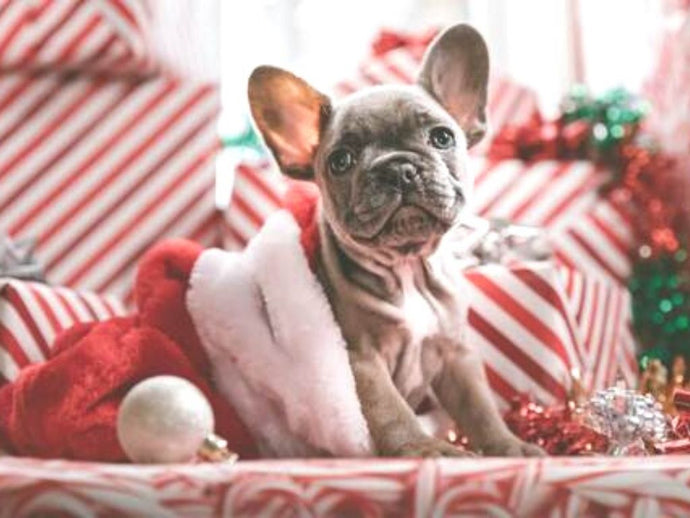 The Best Holiday Gift Guide for Dogs & Cats - 2020