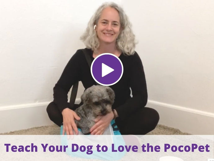 Train Your Dog to Love Their PocoPet