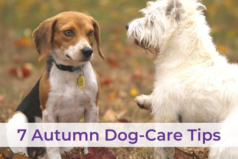PocoPet Dog Carrier Autumn Pet Care Tips