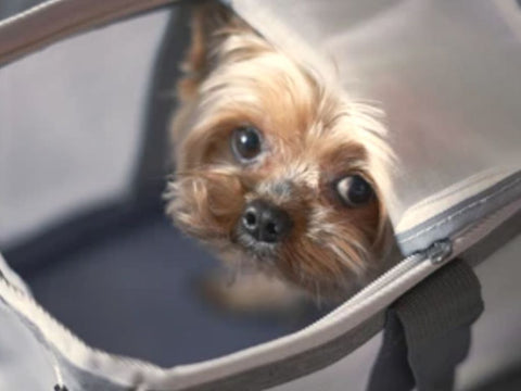 best small dog carrier for airline travel