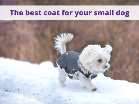best small dog coat pocoopet