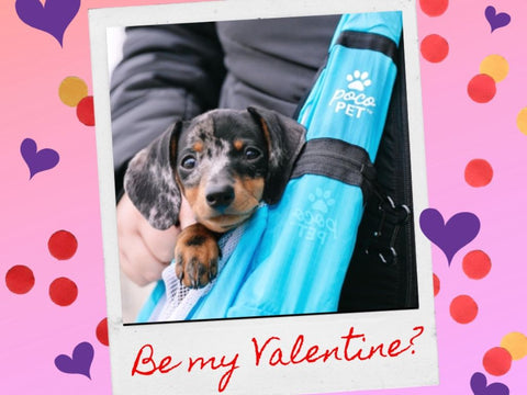 celebrate valentines day with your dog