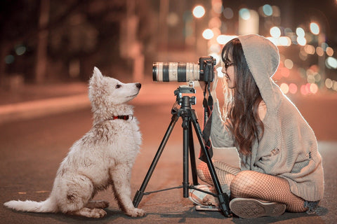 How to take great photos of your dogs with your iphone android smartphone camera