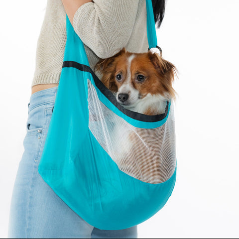 jake in tiny dog carrier bag