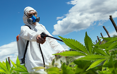 Cannabis Pesticide Application