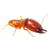Termite Control Products