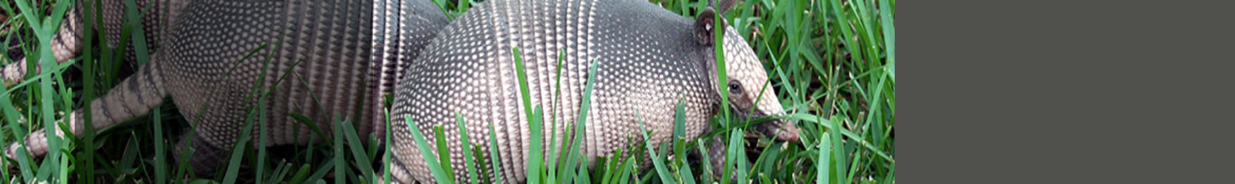 Armadillo Control Products