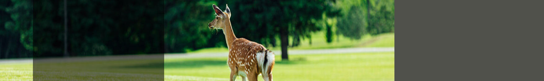Deer Control Products