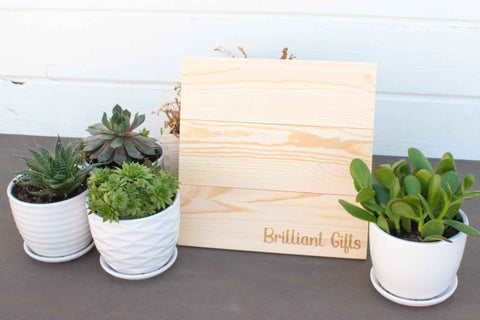 Premium Succulent Gifts | BrilliantGifts.com
