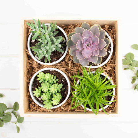 Large Succulent Gift Crate