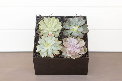 Succulent Gift Crate | BrilliantGifts.com