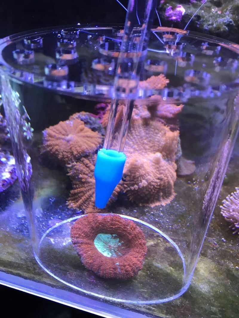 Coral Feeder