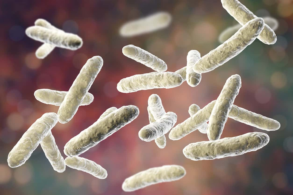 Importance of Balance Bacteria with Spore-Based Probiotic