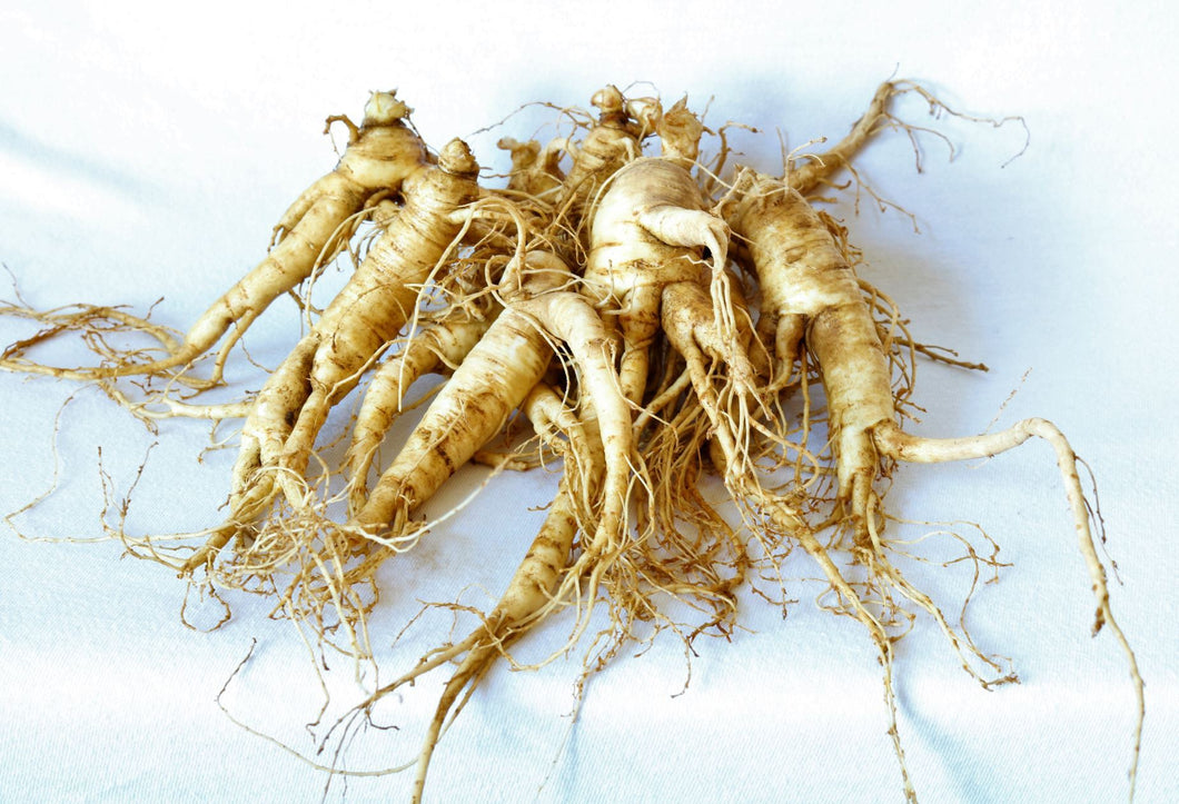 Ginseng Transplant Roots 4 years old