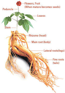 1/4 LB Premium American Ginseng Seeds - Dairyland Management LLC