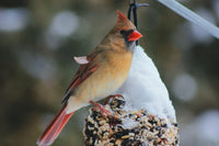 Winter Bird Feeding!