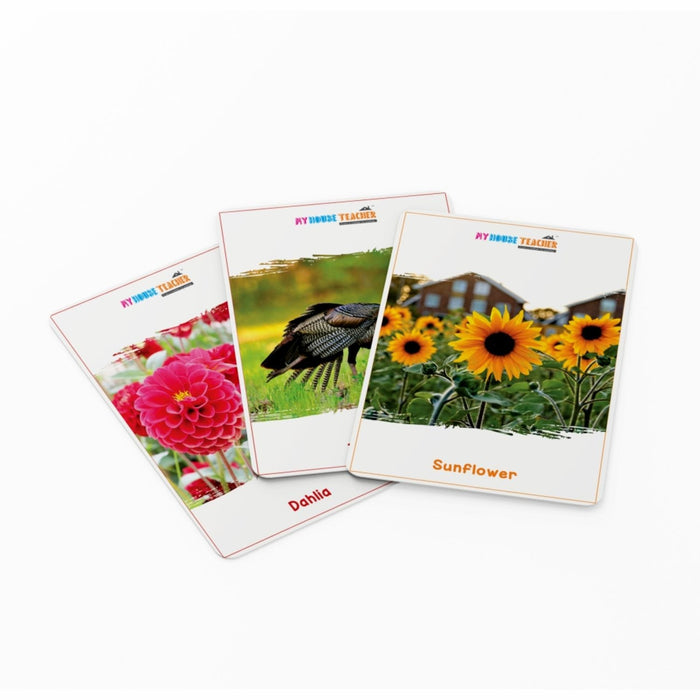 Flowers And Birds Flashcards Set Of 48