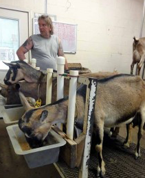 goats being milked Shoalhaven NSW