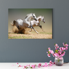 Pentium horse animal decorative painting 007