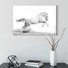 Pentium horse animal decorative painting 008
