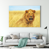 Cute lion animal decorative drawing 086